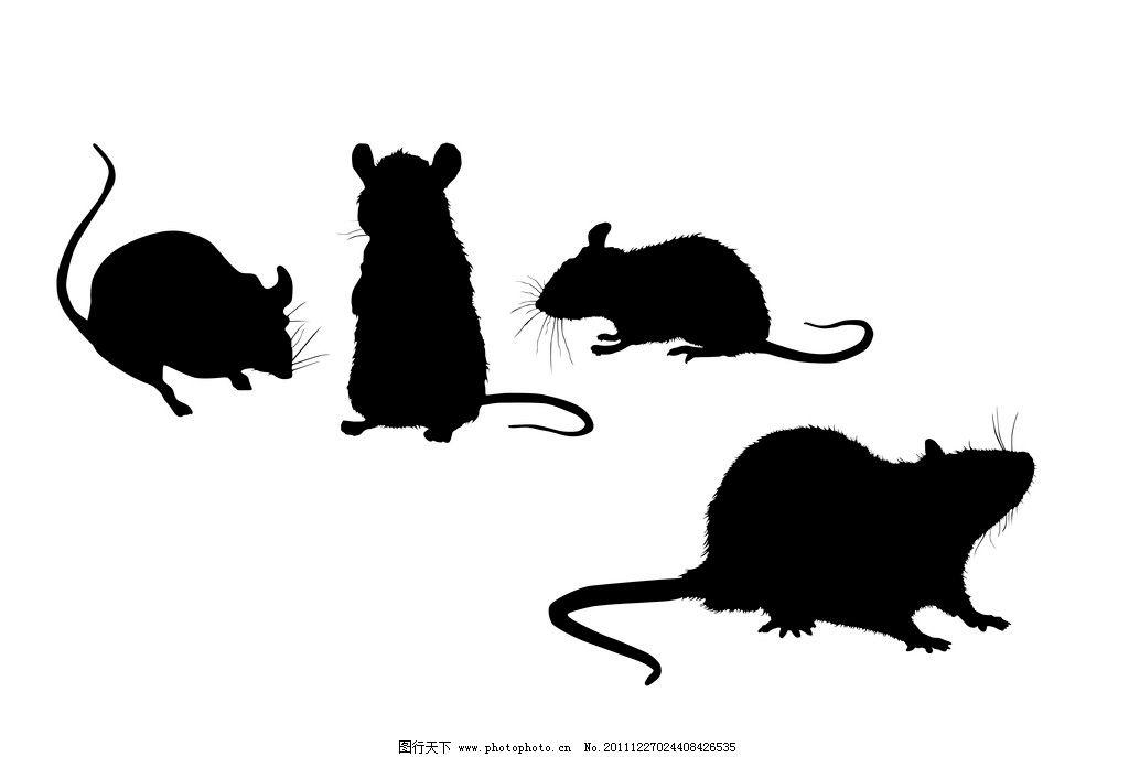 老鼠 野生动物 生物世界