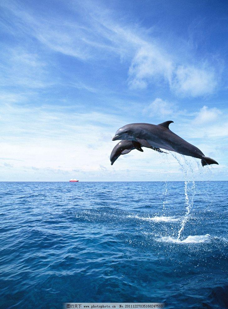 海洋动物 海豚 蓝天 白云 海洋生物 生物世界 摄影