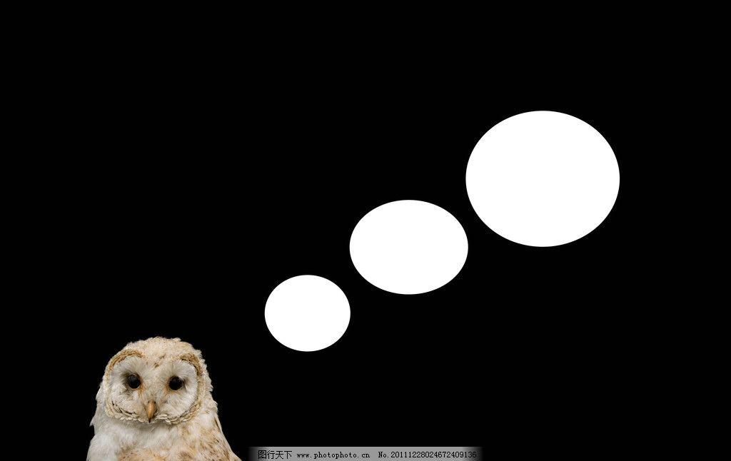 猫头鹰素材 猫头鹰 鸟类 保护动物 珍稀动物 珍贵 生物世界 设计 300