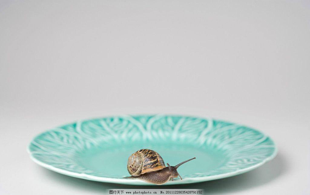 盘子里的蜗牛 餐具 软体动物 创意 广告 摄影 昆虫虫子