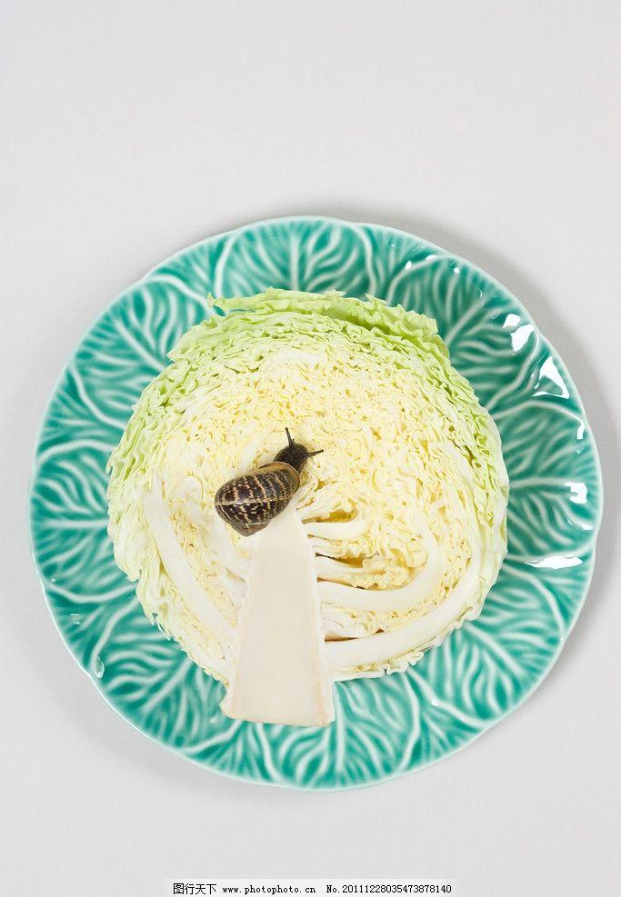 白菜上的蜗牛 盘子 餐具 卷心菜 昆虫 软体动物 昆虫虫子 生物世界