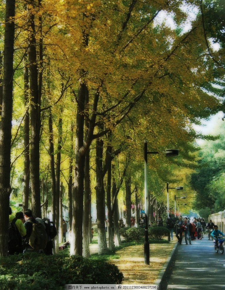 朝晖银杏林 自然风景 杭州市 儿童 秋游 户外活动 自然景观 摄影 72